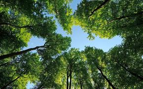 树, 冠, 顶部, 性质