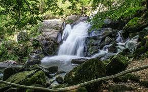 滝, 可児, 木, BRANCH, 自然