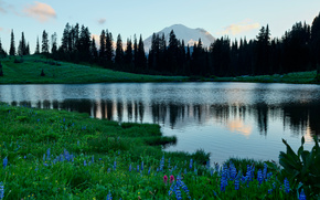 Tipsoo Lago, Mount Rainier, Mount Rainier National Park, Washington, Lago Tifsa, Mount Rainier, montagna, Fiori, alberi, lago