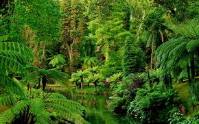 Сады, Португалия, Тропики, Лес, Botanical Furnas, Природа, пейзаж