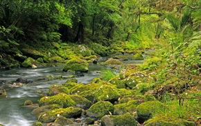tropics, New Zealand, river, stones, forest, Hatea River, moss, nature