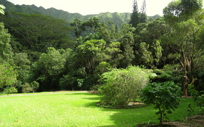 jardin, USA, Lyon Arboretum Oahu, Hawaii, herbe, pelouse, nature