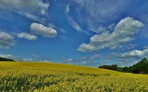 field, Bodenwerder-Linse, Lower Saxony, Germany