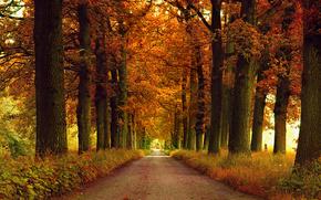 parco, VICOLO, autunno