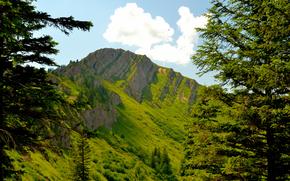 山脈, 木, 自然, 風景
