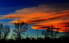 日没, シルエット, 木, 風景