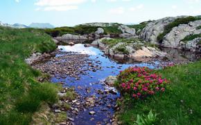 フランス, 池, 岩, 草, フラワーズ, 風景