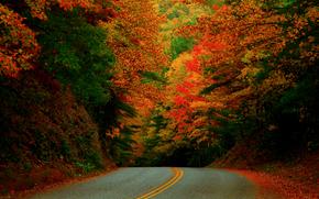EE.UU., Carolina del Norte, otoño, Octubre, carretera, bosque, pinturas