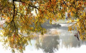 公园, 湖, 树, 支, 秋