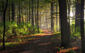 forest, trees, TRAIL, bush, sunlight