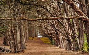 деревья, дорога, природа, пейзаж