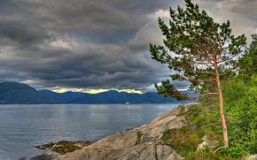 Sognefjord, Norway, Согне-фьорд, Норвегия, дерево, сосна, горы, облака