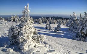 Saxony-Anhalt, Germany, Саксоьния-Анхалт, Германия, зима, снег, деревья