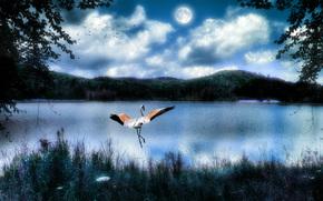 Crane Dance, crane, 3d, art