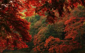 листья, деревья, осень, природа