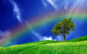 холмы, дерево, радуга, пейзаж