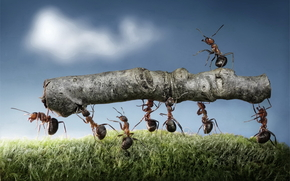 Team of ants, by, Andrey Pavlov