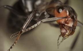 Squadra di formiche, da, Andrey Pavlov