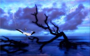dance zhurovlya, crane, 3d, art