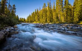 forest, river, FLOW, stones