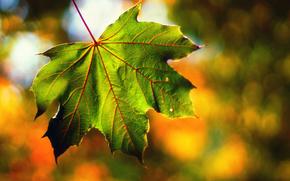 Macro, list, light, bokeh, autumn, September