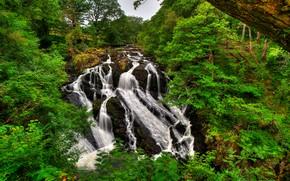 Snowdonia, Regno Unito, cascata, alberi, natura