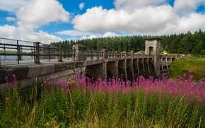 Snowdonia, Regno Unito, ponte, Fiori, nuvole, paesaggio