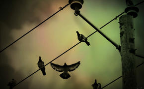 wire, Pigeons, post