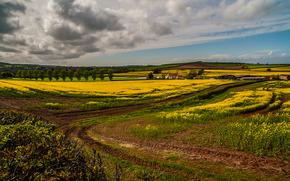 campo, alberi, cespuglio, pond, Fiori, cielo, nuvole, natura, paesaggio