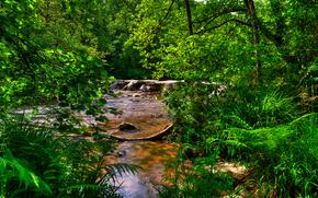 塔尔步骤, 埃克斯穆尔, 联合王国, 河, 树, 景观