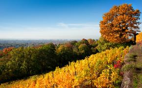 Goldener ottobre, autunno, Dresda, Germania