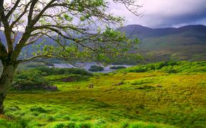 campo, Montagne, lago, albero, paesaggio