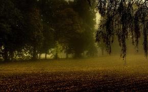 árboles, campo, arable, rama, niebla, otoño