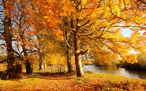 Scotland, Motherwell, Scotland, Motherwell, Motherwell, city, nature, forest, autumn, trees, foliage, yellow, fence, fence, river, Clyde, water, sun, light