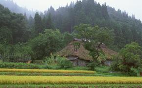 日本, 房子, 森林
