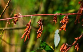 twig, nature, Macro