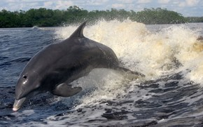 mar, delfín, ondas