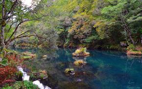 río, árboles, bosque, naturaleza, paisaje