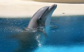 acqua, delfino, onde