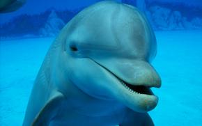 acqua, delfino, fondo