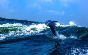 mare, onde, delfino