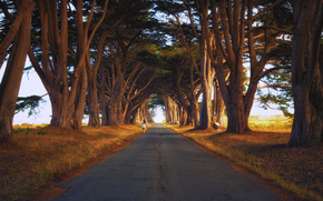 droga, drzew, Cyprys, California, USA
