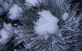 winter, snow, branch, pine, needles, Macro