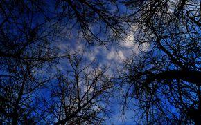夜, 木, BRANCH, 王冠, 自然