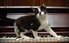 kitten, piano, Keys