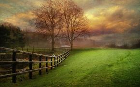 Parkland, tramonto, alberi, campo, Nuvole