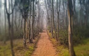 дорога, тропинка, деревья, туман, осень