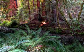 bosque, árboles, plantas, naturaleza
