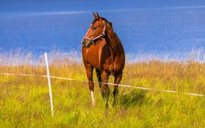 лошадь, конь, берег реки