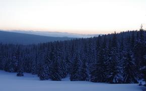 зима, снег, деревья, пейзаж, ели